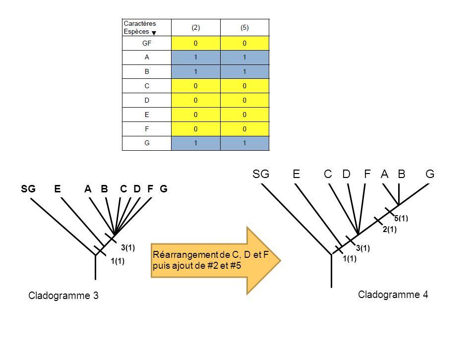 1(1) 3(1) 5(1) 2(1) 1(1) 3(1) SG E A B C D F G SG E C D F A B G Réarrangement de C, D et F puis ajout de #2 et #5 Cladogramme 3 Cladogramme 4