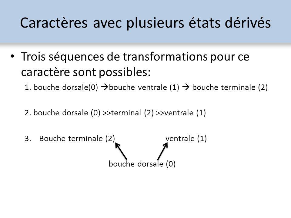 Trois séquences de transformations pour ce caractère sont possibles: 1. bouche dorsale(0) bouche ventrale (1) bouche terminale (2) 2. bouche dorsale (