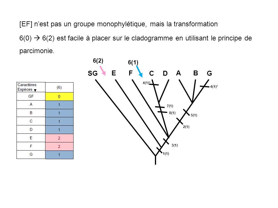 [EF] nest pas un groupe monophylétique, mais la transformation 6(0) 6(2) est facile à placer sur le cladogramme en utilisant le principe de parcimonie