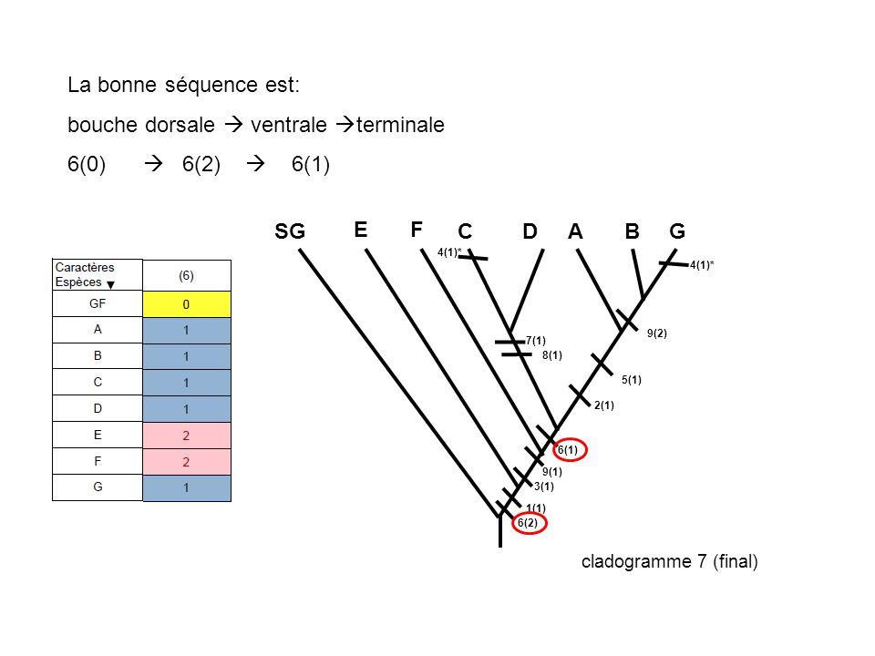 La bonne séquence est: bouche dorsale ventrale terminale 6(0) 6(2) 6(1) 1(1) 3(1) 2(1) 5(1) 7(1) 8(1) 9(2) 9(1) 6(2) 6(1) SG E F CDABG 4(1)* cladogram