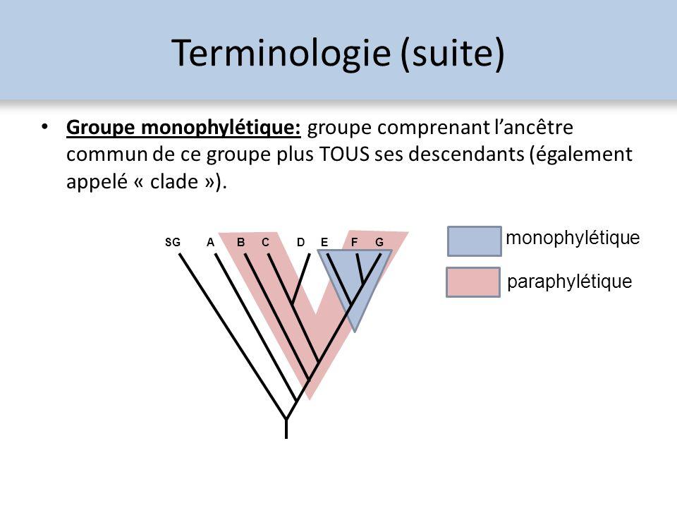 Terminologie (suite) Groupe monophylétique: groupe comprenant lancêtre commun de ce groupe plus TOUS ses descendants (également appelé « clade »). SGA