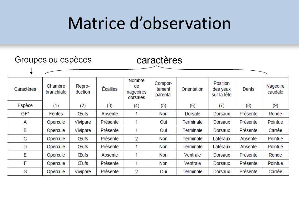 Matrice dobservation Groupes ou espèces caractères