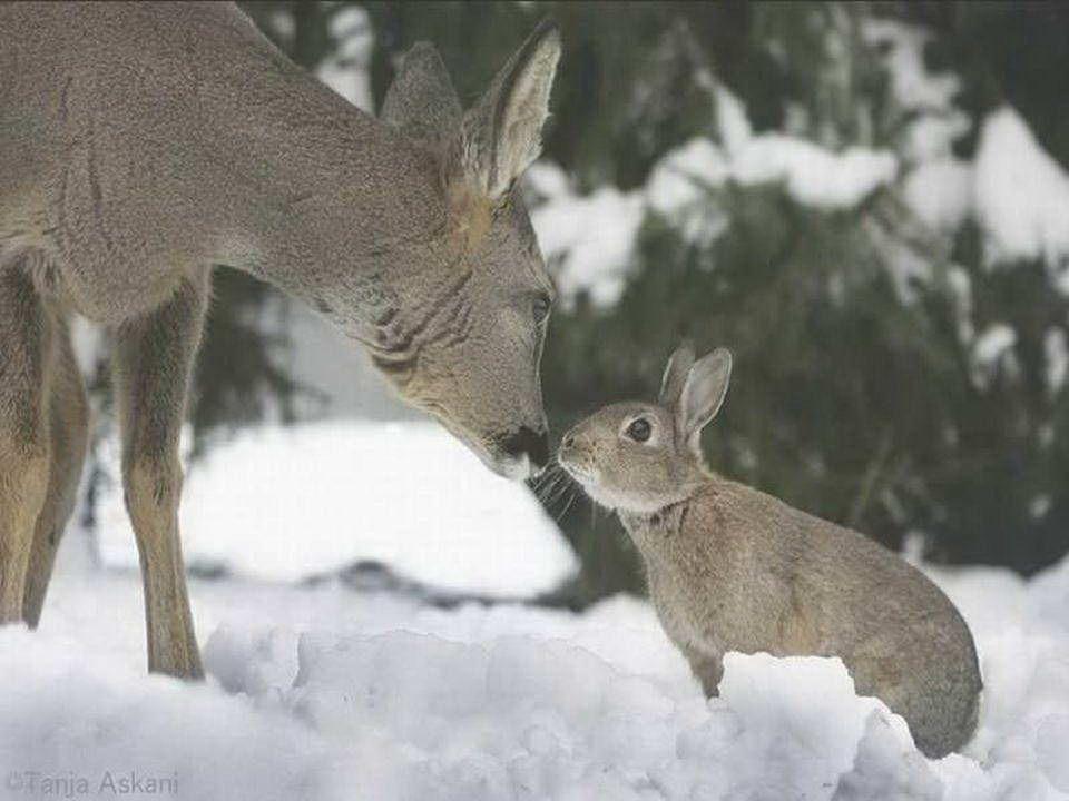 Souvenez- vous de Bambi et de Tambour ! Hé bien, on vient de les retrouver!