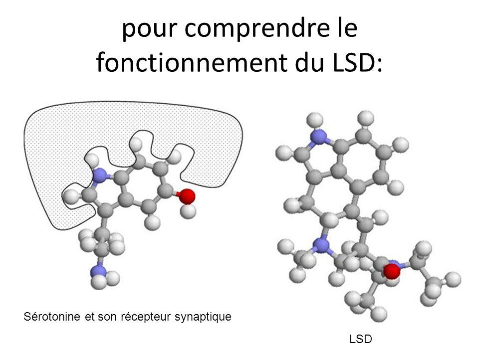 pour comprendre le fonctionnement du LSD: Sérotonine et son récepteur synaptique LSD