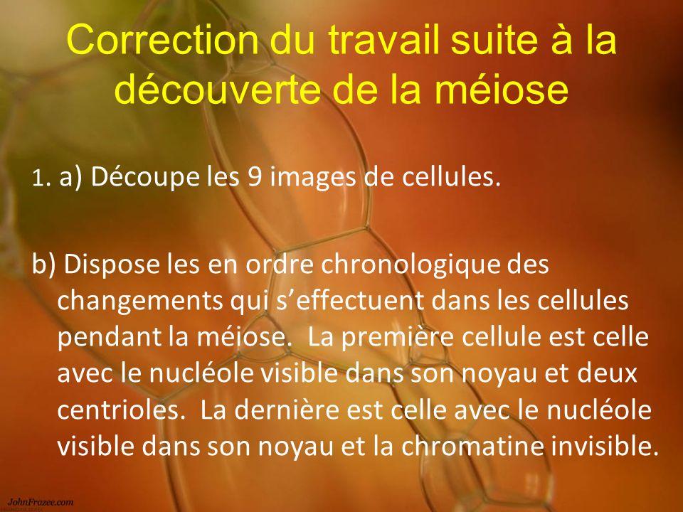 Correction du travail suite à la découverte de la méiose 1.