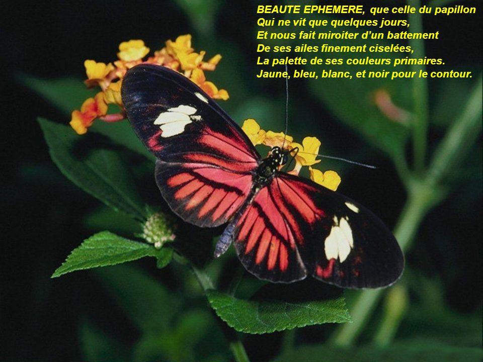 BEAUTE EPHEMERE, que celle du papillon Qui ne vit que quelques jours, Et nous fait miroiter dun battement De ses ailes finement ciselées, La palette de ses couleurs primaires.