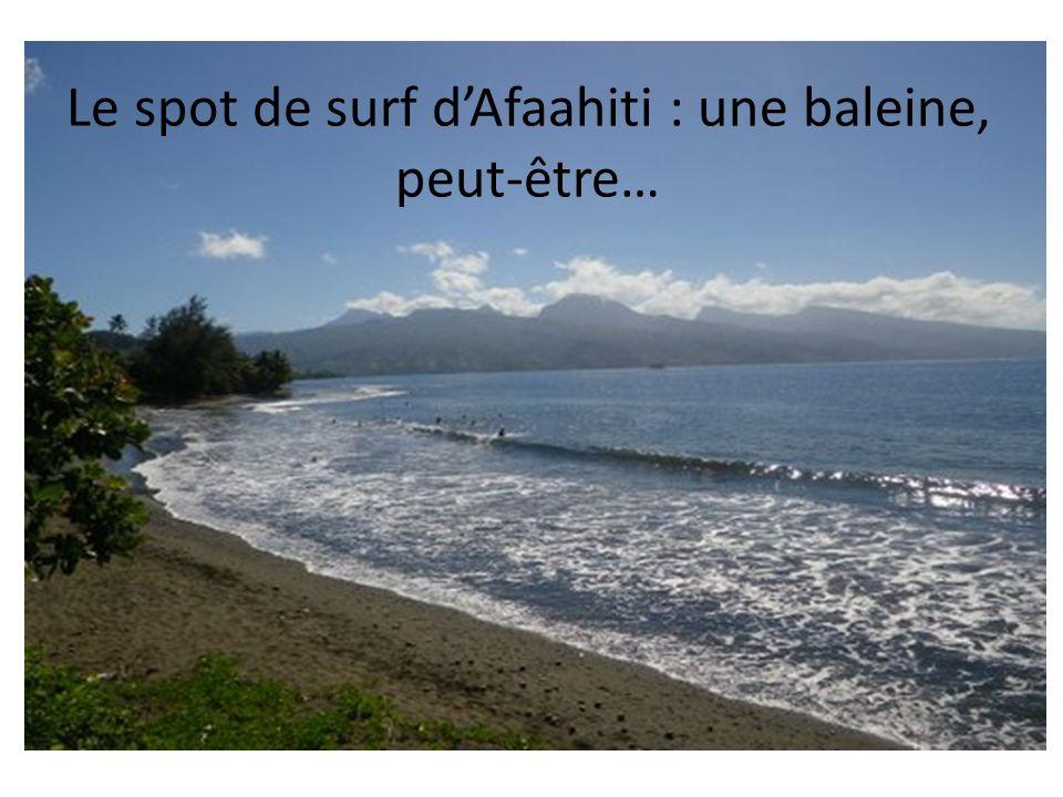 Le spot de surf dAfaahiti : une baleine, peut-être…