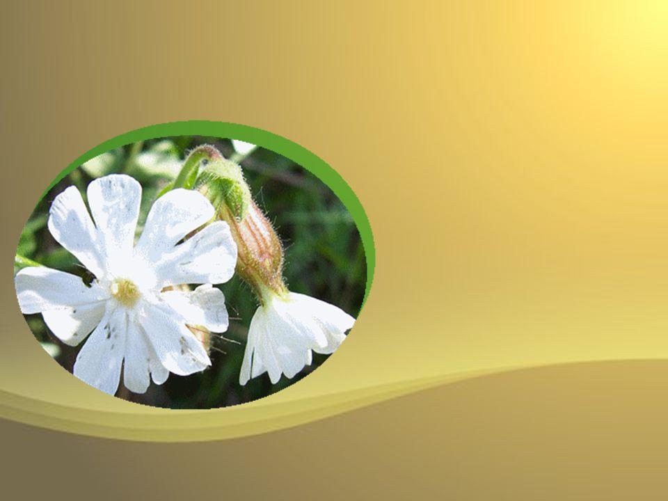 En toi miséricorde, en toi pitié, en toi magnificence, en toi sassemble tout ce quil y a de bonté dans la créature.