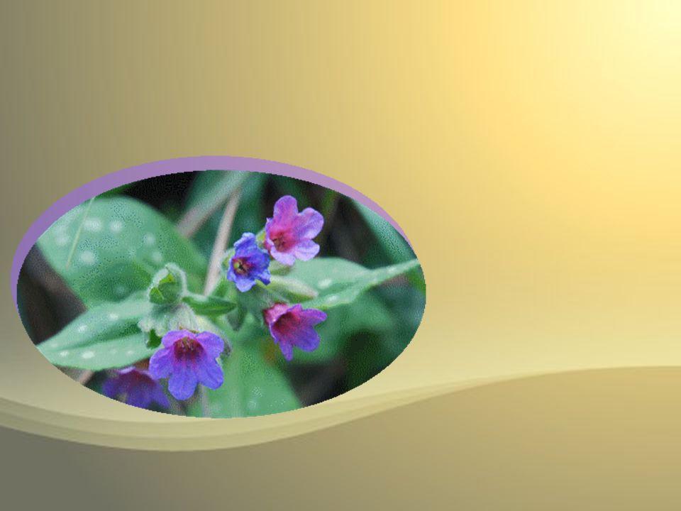 En ton sein se ralluma lamour par lardeur duquel, dans léternelle paix, a germé cette fleur céleste.