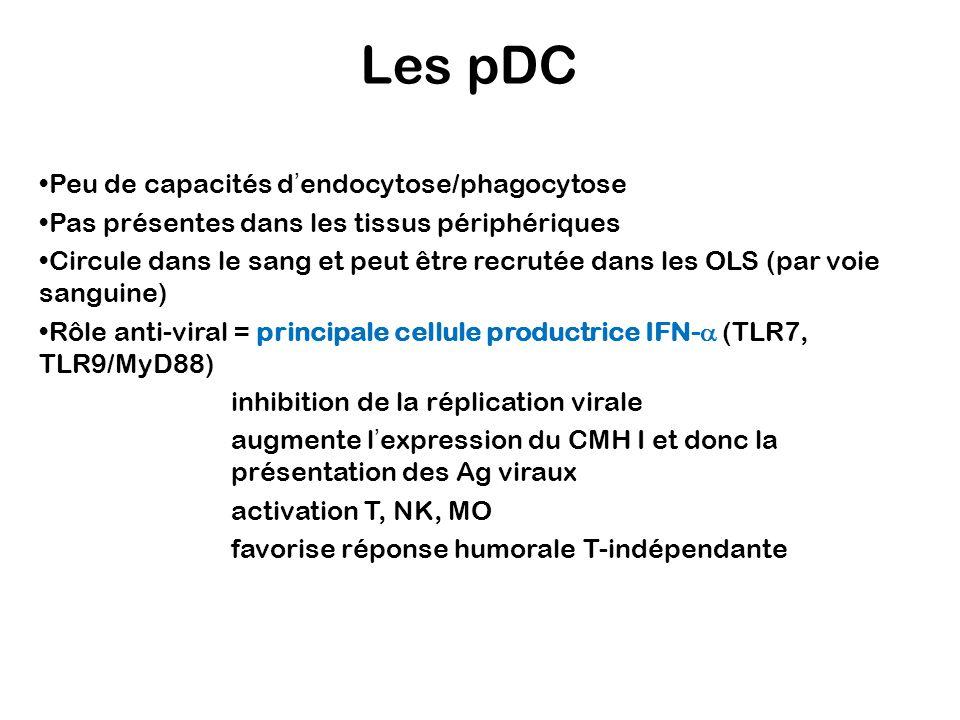 Peu de capacités dendocytose/phagocytose Pas présentes dans les tissus périphériques Circule dans le sang et peut être recrutée dans les OLS (par voie