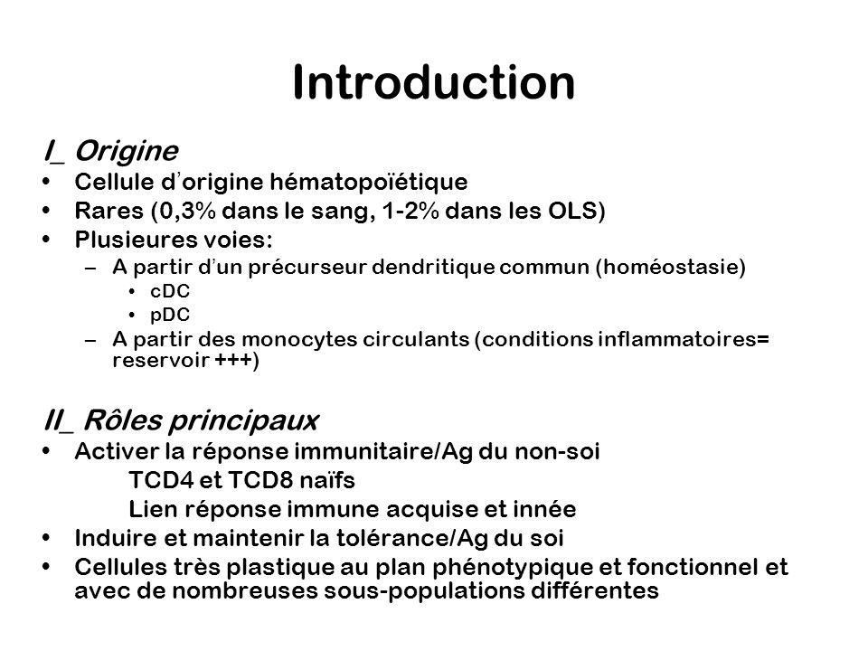 I_cDC et activation de limmunité a) Localisation et fonction différentes/ MATURATION (Schéma1) DC immatures- Cellules de Langerhans (peau, muqueuses) - DC intersticielles (tissus non lymphoïdes) Capture/internalisation de lAg réponse anti-bactérienne>>réponse anti-virale DC matures- DC interdigitées Activation T Les cDC (et les MO-DC)
