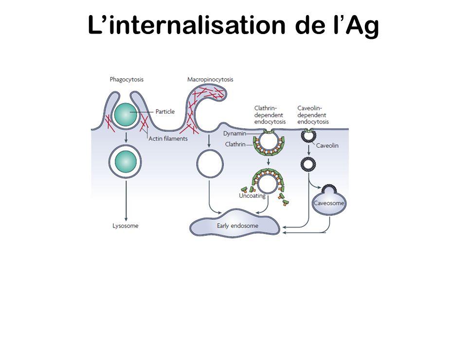 Le signal TLR TLR4 MyD88 TRIF IFN TNF IL-6 E.