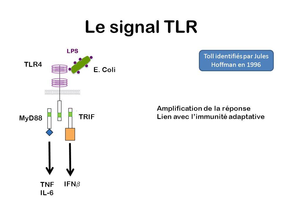 Le signal TLR TLR4 MyD88 TRIF IFN TNF IL-6 E. Coli LPS Amplification de la réponse Lien avec limmunité adaptative Toll identifiés par Jules Hoffman en