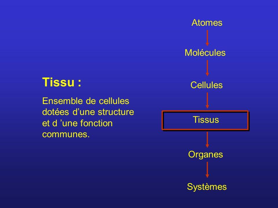Atomes Molécules Cellules Tissus Organes Systèmes Tissu : Ensemble de cellules dotées dune structure et d une fonction communes.