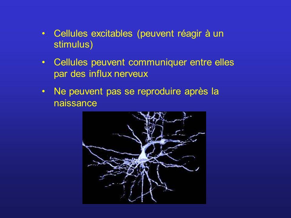 Cellules excitables (peuvent réagir à un stimulus) Cellules peuvent communiquer entre elles par des influx nerveux Ne peuvent pas se reproduire après la naissance