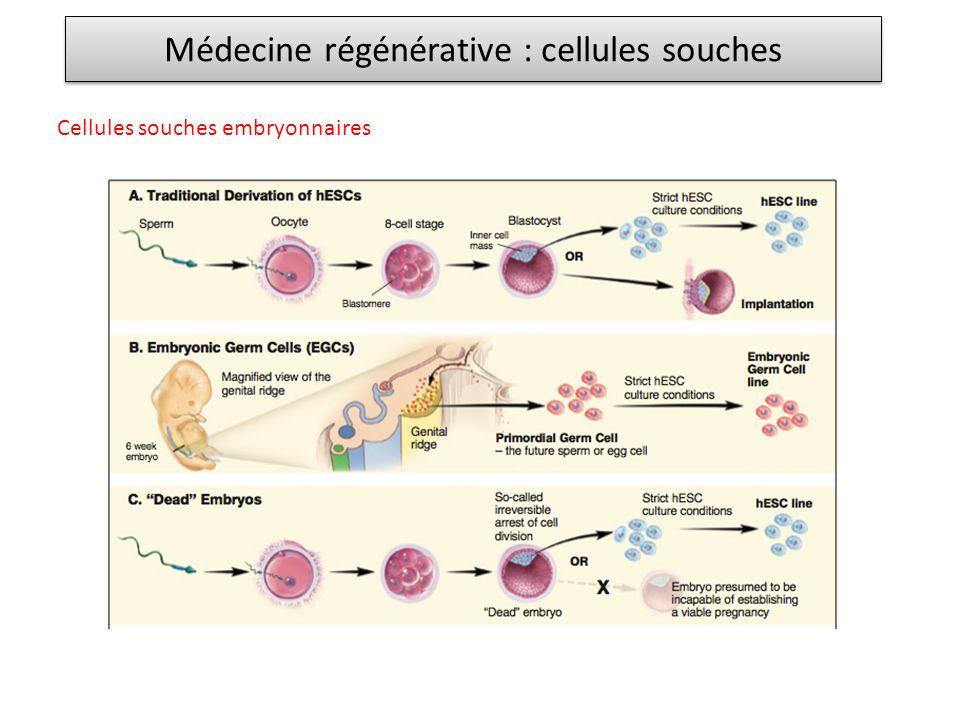 Médecine régénérative : cellules souches Cellules souches embryonnaires