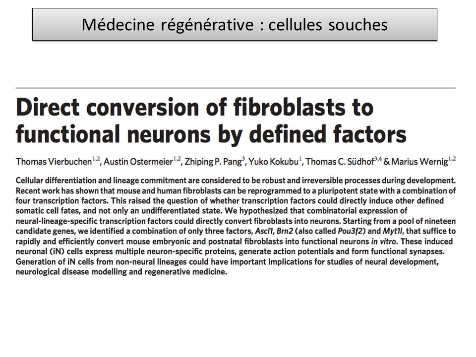 Rôle « positif » de la fascicline III Molécule dadhésion homophilique Exprimée par les neurones RP3 Exprimée par les muscles 6 et 7 au moment de larrivée du cône de croissance de RP3