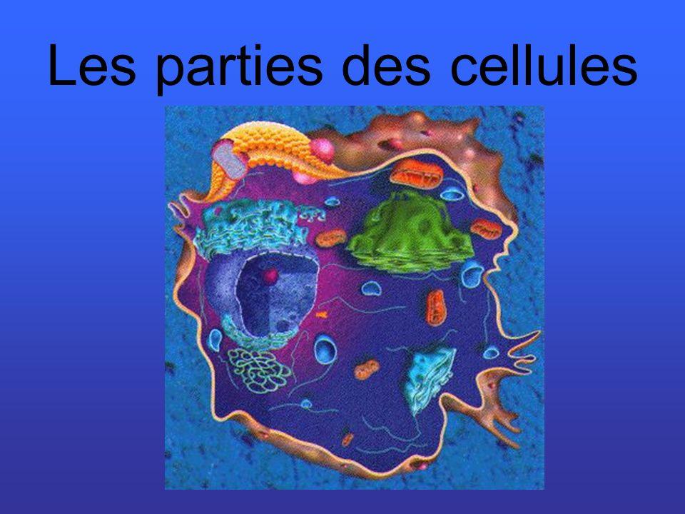 Les parties des cellules