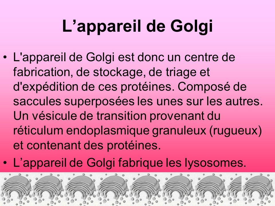 Lappareil de Golgi L appareil de Golgi est donc un centre de fabrication, de stockage, de triage et d expédition de ces protéines.