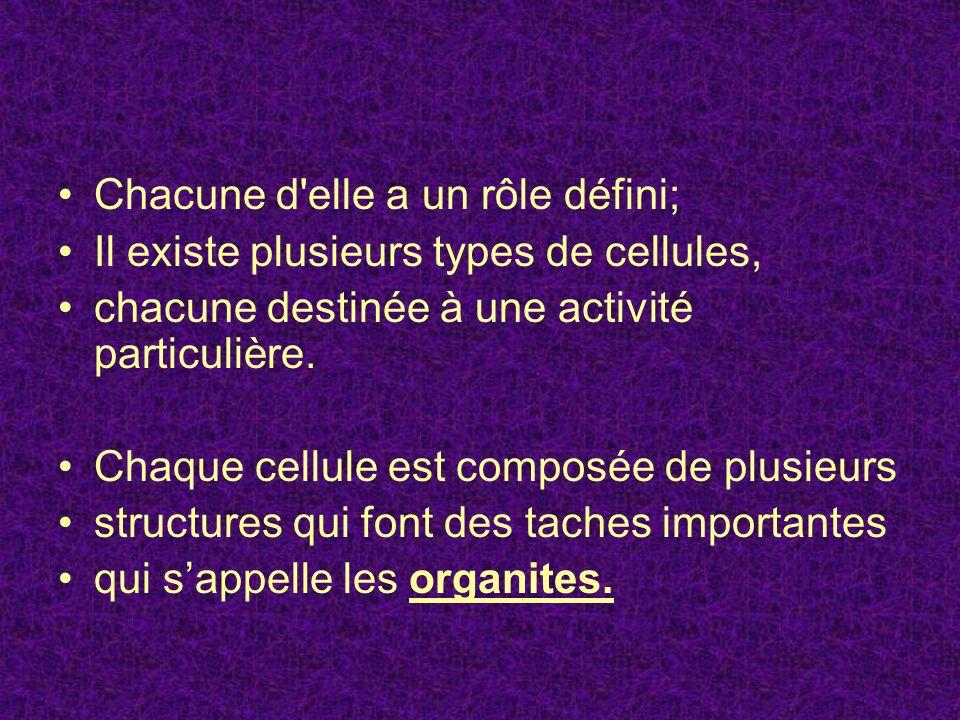 Chacune d elle a un rôle défini; Il existe plusieurs types de cellules, chacune destinée à une activité particulière.