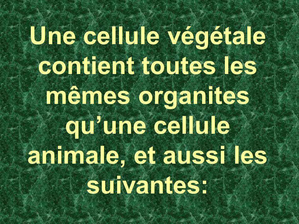 Une cellule végétale contient toutes les mêmes organites quune cellule animale, et aussi les suivantes: