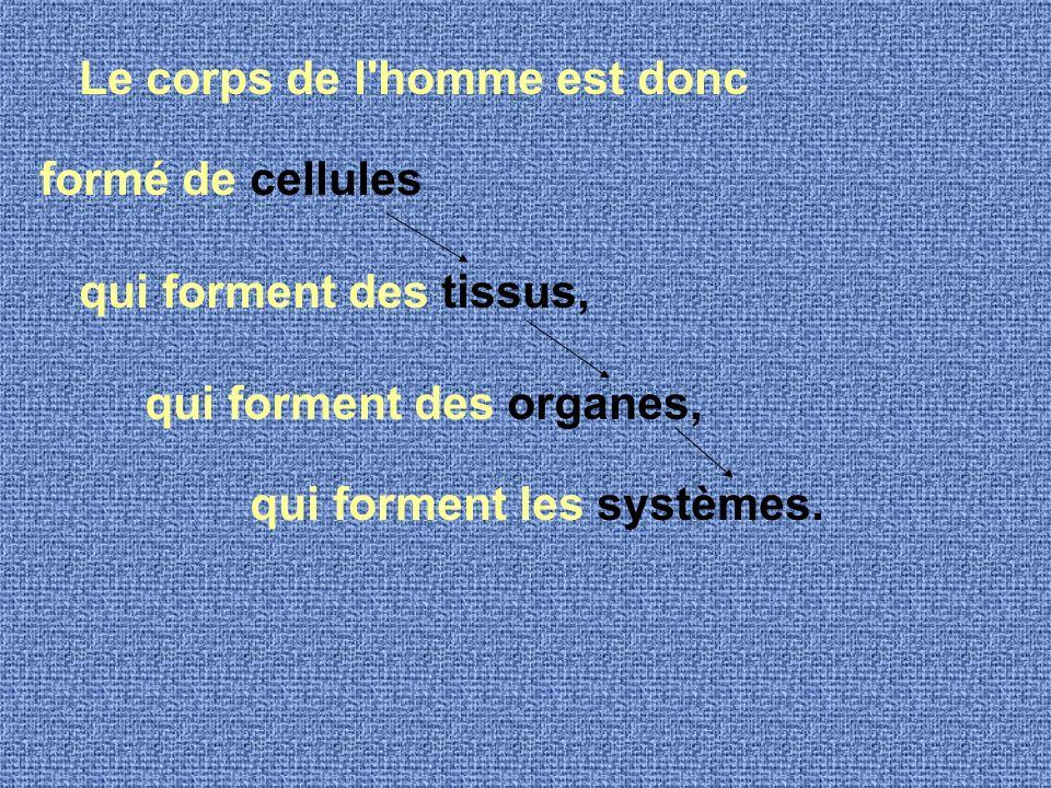 Le corps de l homme est donc formé de cellules qui forment des tissus, qui forment des organes, qui forment les systèmes.