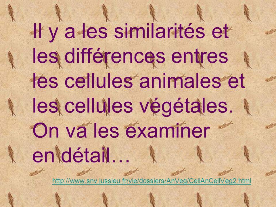 http://www.snv.jussieu.fr/vie/dossiers/AnVeg/CellAnCellVeg2.html Le corps humain compte près de soixante mille milliards de cellules.