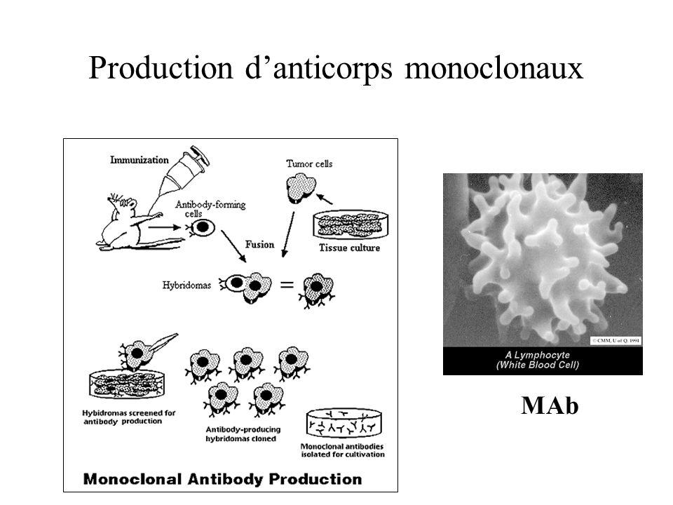 Production danticorps monoclonaux MAb