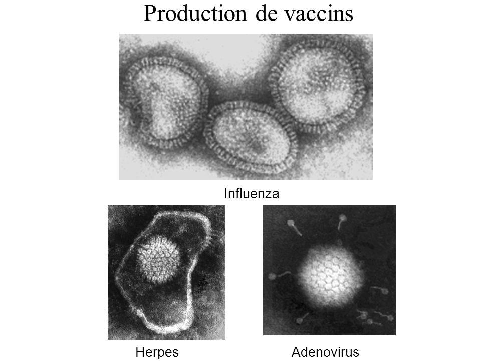 Influenza HerpesAdenovirus Production de vaccins