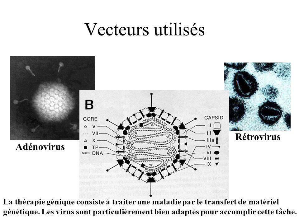 Vecteurs utilisés Adénovirus Rétrovirus La thérapie génique consiste à traiter une maladie par le transfert de matériel génétique. Les virus sont part