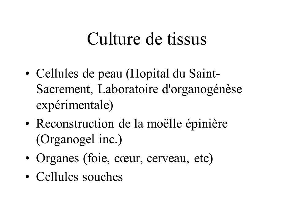 Culture de tissus Cellules de peau (Hopital du Saint- Sacrement, Laboratoire d organogénèse expérimentale) Reconstruction de la moëlle épinière (Organogel inc.) Organes (foie, cœur, cerveau, etc) Cellules souches