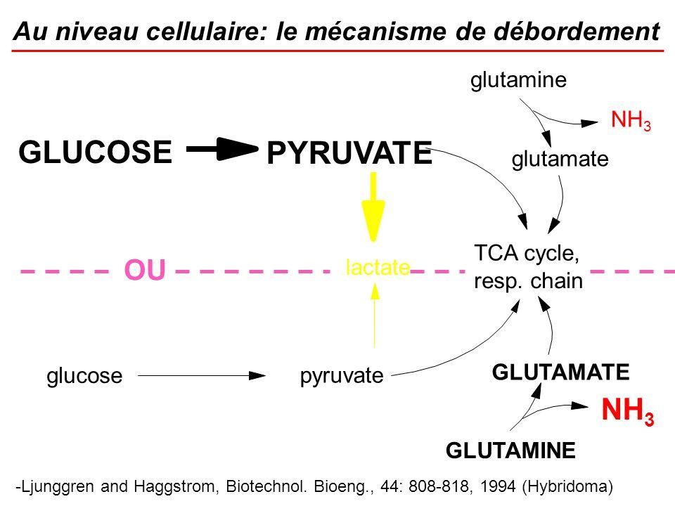 Au niveau cellulaire: le mécanisme de débordement -Ljunggren and Haggstrom, Biotechnol. Bioeng., 44: 808-818, 1994 (Hybridoma) GLUCOSE PYRUVATE TCA cy