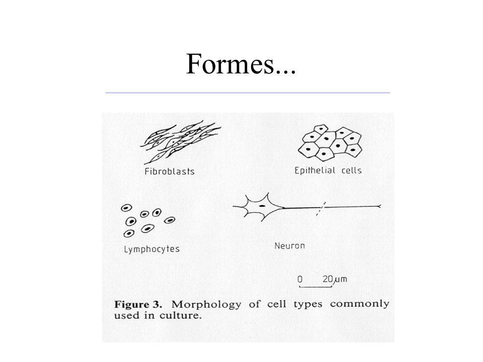 Au niveau du bioréacteur –Microporteurs (poreux ou non) –Micro-capsules –Fibres creuses –Rétention des cellules (perfusion): Spin-filters (intra ou extra bioréacteur) centrifugeuse en continu Sonosep
