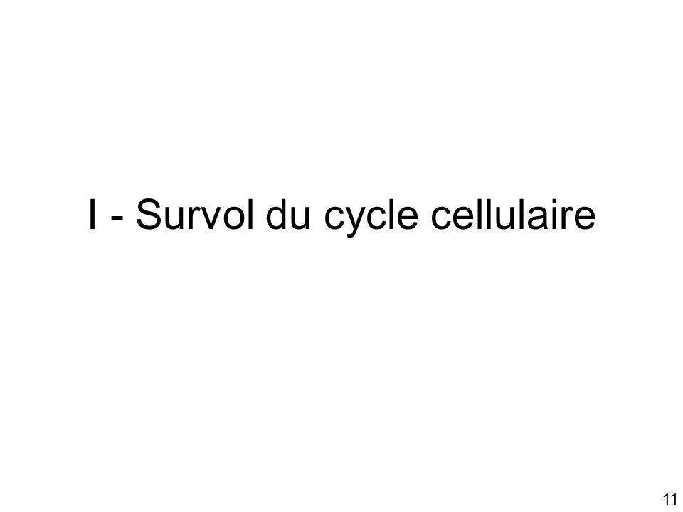 11 I - Survol du cycle cellulaire