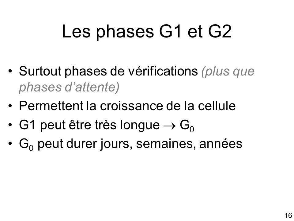 16 Les phases G1 et G2 Surtout phases de vérifications (plus que phases dattente) Permettent la croissance de la cellule G1 peut être très longue G 0
