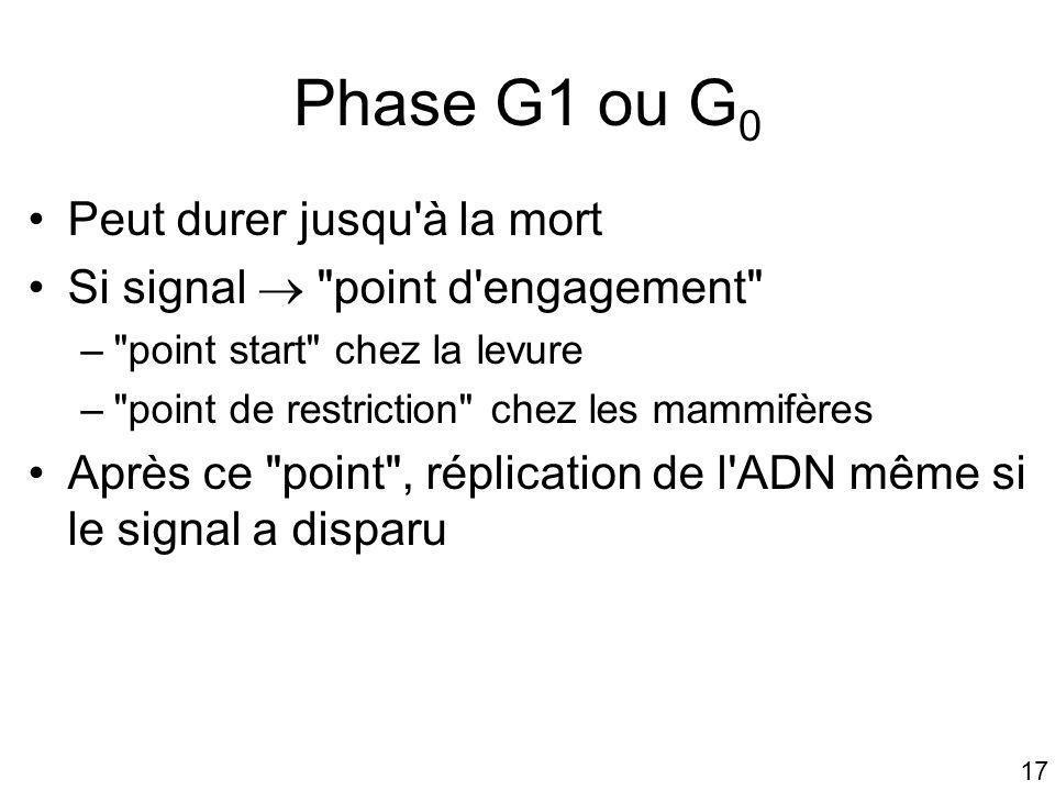 17 Phase G1 ou G 0 Peut durer jusqu'à la mort Si signal