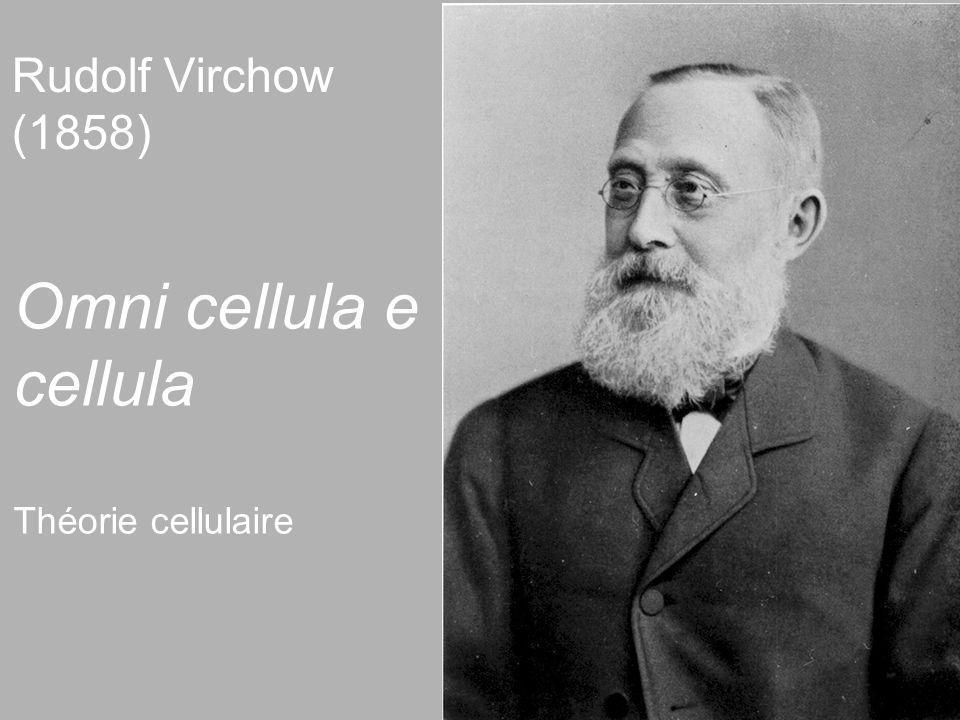 3 Rudolf Virchow (1858) Omni cellula e cellula Théorie cellulaire