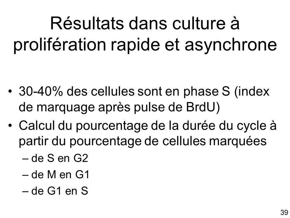39 Résultats dans culture à prolifération rapide et asynchrone 30-40% des cellules sont en phase S (index de marquage après pulse de BrdU) Calcul du p