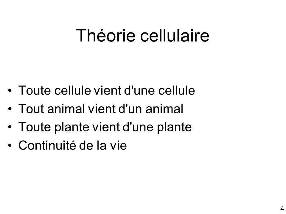 4 Théorie cellulaire Toute cellule vient d'une cellule Tout animal vient d'un animal Toute plante vient d'une plante Continuité de la vie