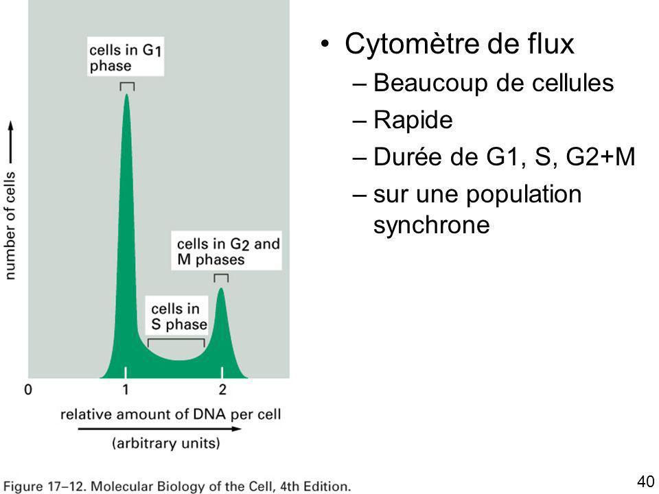 40 Fig 17-12 Cytomètre de flux –Beaucoup de cellules –Rapide –Durée de G1, S, G2+M –sur une population synchrone