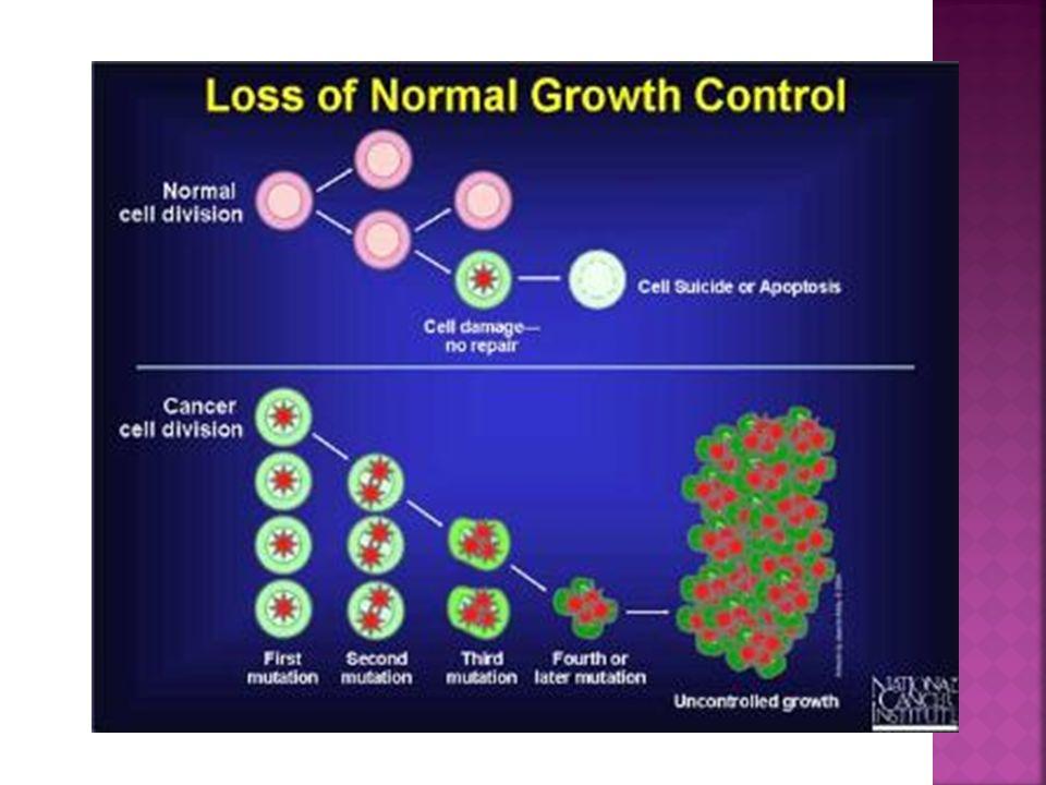 Les cellules cancéreuses se regroupent habituellement ensemble pour former des tumeurs.