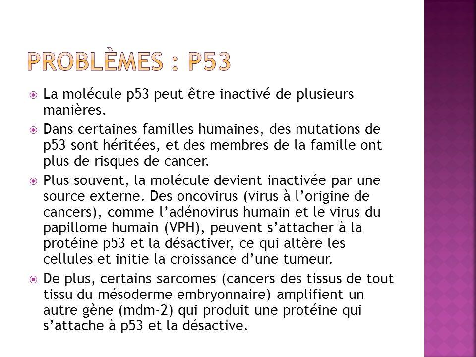 La molécule p53 peut être inactivé de plusieurs manières. Dans certaines familles humaines, des mutations de p53 sont héritées, et des membres de la f