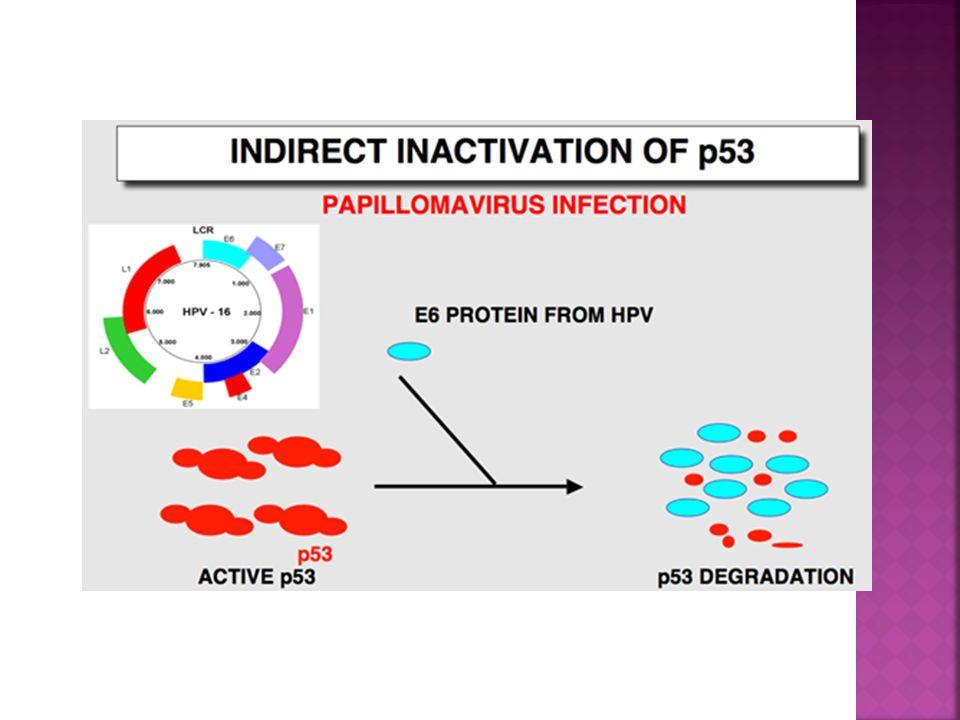 La protéine p53 (suppresseur de tumeur) et ses molécules environnantes sont maintenant le sujet de milliers détudes dans les laboratoires autour du monde.