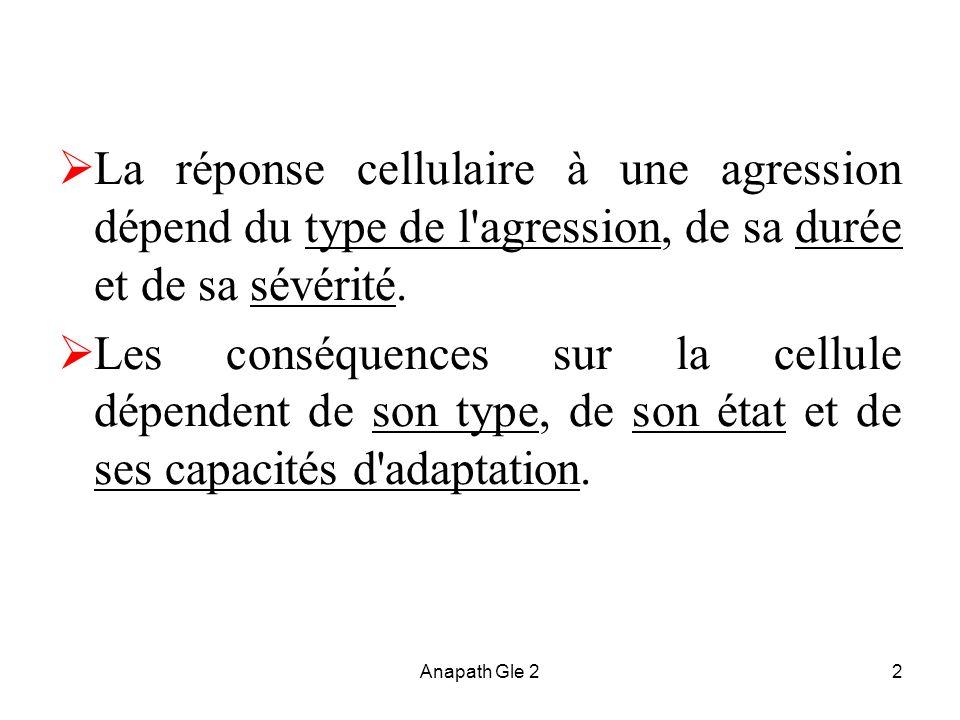 Anapath Gle 22 La réponse cellulaire à une agression dépend du type de l'agression, de sa durée et de sa sévérité. Les conséquences sur la cellule dép