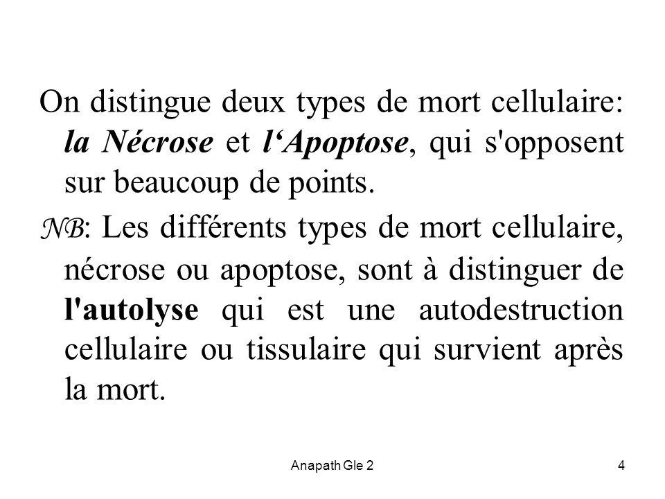 Anapath Gle 24 On distingue deux types de mort cellulaire: la Nécrose et lApoptose, qui s'opposent sur beaucoup de points. NB : Les différents types d