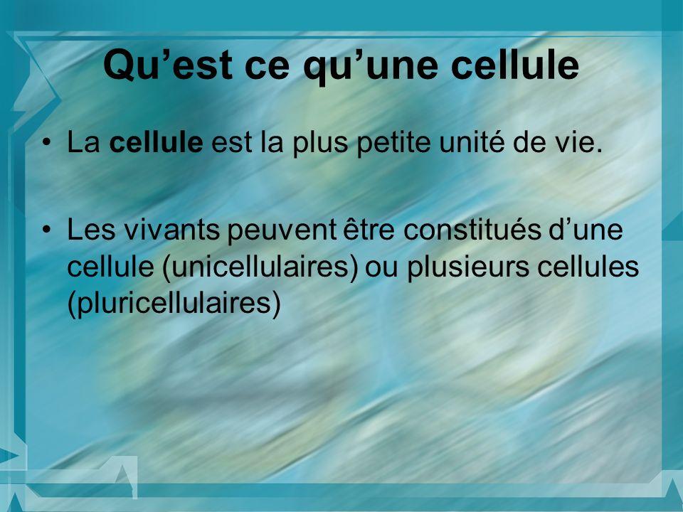 Quest ce quune cellule La cellule est la plus petite unité de vie. Les vivants peuvent être constitués dune cellule (unicellulaires) ou plusieurs cell