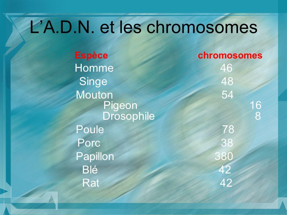 Espèce chromosomes Homme 46 Singe 48 Mouton 54 Pigeon 16 Drosophile 8 Poule 78 Porc 38 Papillon 380 Blé 42 Rat 42