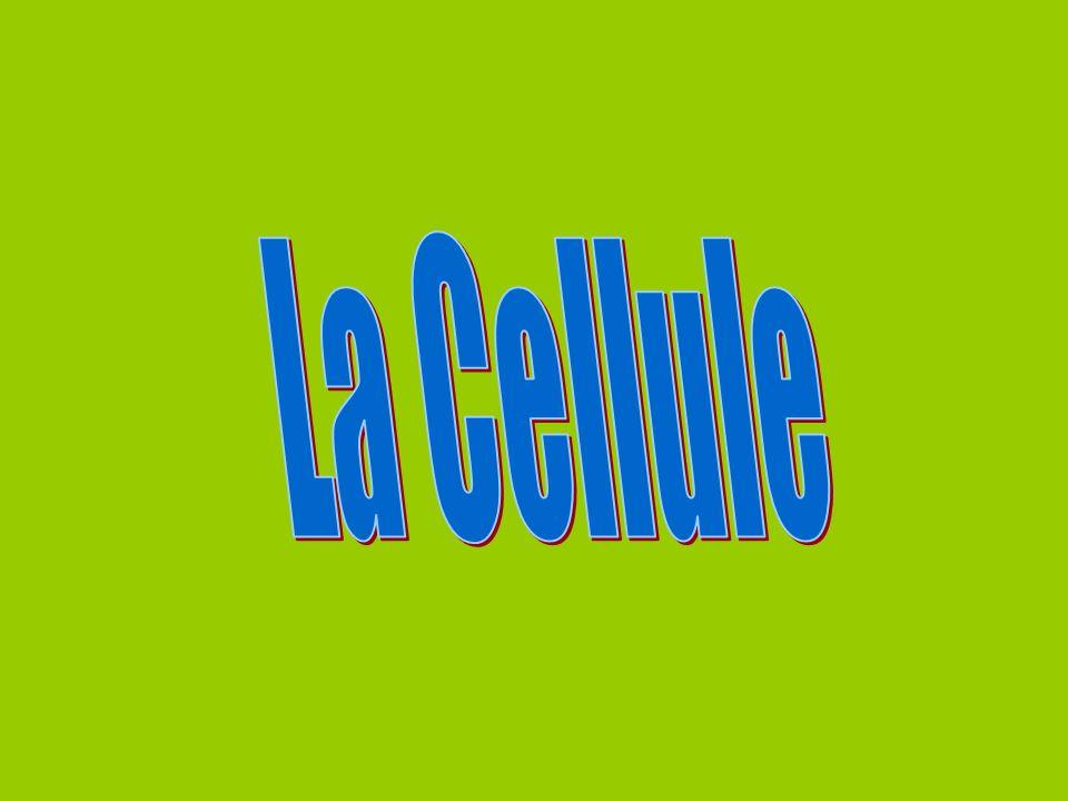 Cellule végétale seulement Chloroplaste èContient de la chlorophylle.