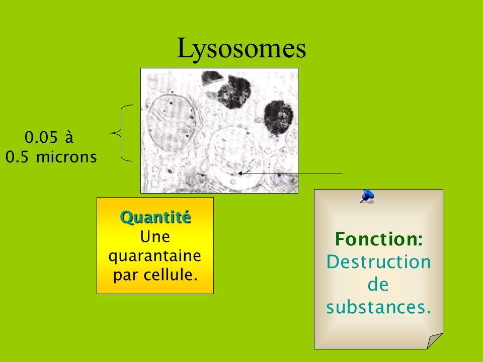 Cellule végétale seulement Chloroplaste èContient de la chlorophylle. 4 à 6 microns Quantité 40 à 50 par cellule Fonction: faire de la photosynthèse,