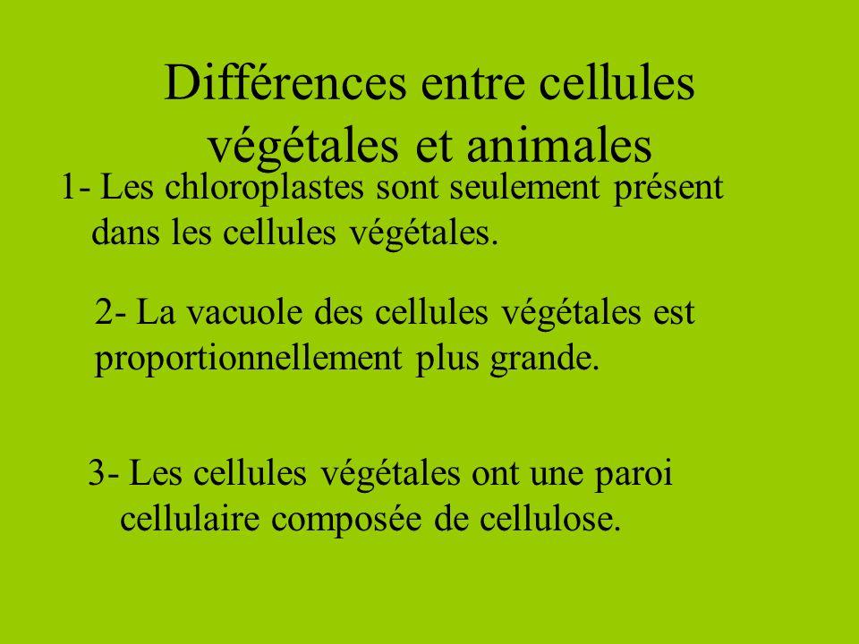 Cytosol Le cytosol est le gel-liquide qui est dans la cellule. Cytoplasme Le cytoplasme est lensemble du cytosol et des organites.